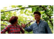 葡萄(ぶどう)農家での農作業