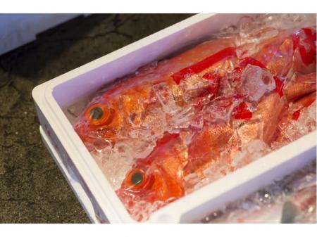 年末年始だけの短期求人!日払いOKの鮮魚加工業務