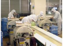 食品の製造スタッフ