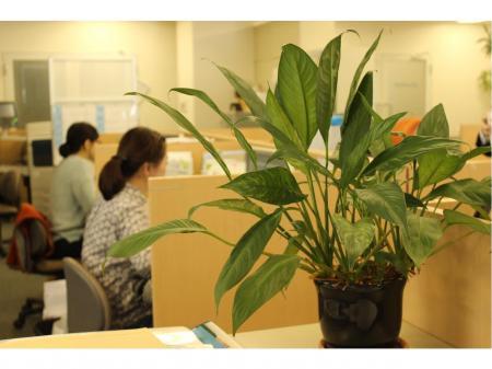 岡山で転勤なしで働く!WEBデザイナー