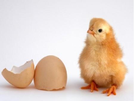 農場での鶏のえさやり、卵拾い等の作業、他