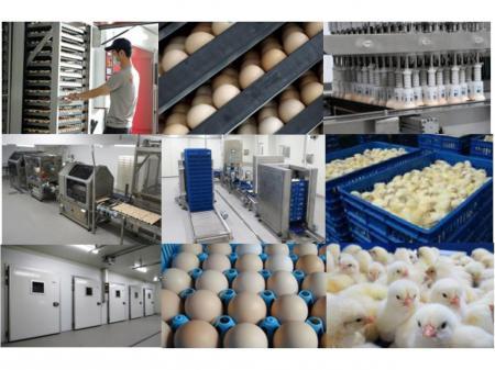 全国でも最大規模を誇る新孵化場での生産設備管理