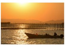 漁業協同組合での作業