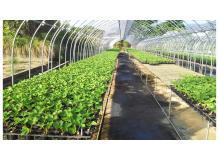 地域密着型ホームセンターでの園芸品栽培部門責任者候補